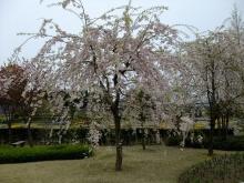 +++ りり☆Blog evolution +++ 広島在住OLの何かやらかしてる日記(ゝω・)o-20100418_212.jpg