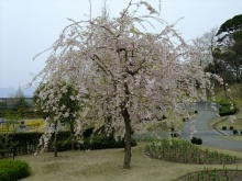+++ りり☆Blog evolution +++ 広島在住OLの何かやらかしてる日記(ゝω・)o-20100418_213.jpg