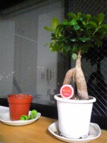 $+++ りり☆Blog evolution +++ 広島在住OLの何かやらかしてる日記(ゝω・)o-DVC00269.jpg
