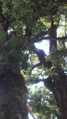 +++ りり☆Blog evolution +++ 広島在住OLの何かやらかしてる日記(ゝω・)o-2010101713500003.jpg