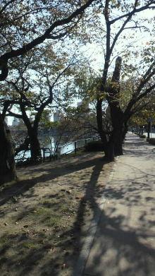 +++ りり☆Blog evolution +++ 広島在住OLの何かやらかしてる日記(ゝω・)o-2010110314050000.jpg