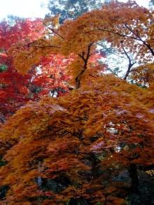 +++ りり☆Blog evolution +++ 広島在住OLの何かやらかしてる日記(ゝω・)o-20101121_051.jpg