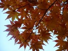 +++ りり☆Blog evolution +++ 広島在住OLの何かやらかしてる日記(ゝω・)o-20101121_055.jpg