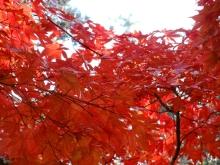 +++ りり☆Blog evolution +++ 広島在住OLの何かやらかしてる日記(ゝω・)o-20101121_060.jpg