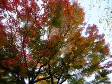 +++ りり☆Blog evolution +++ 広島在住OLの何かやらかしてる日記(ゝω・)o-20101121_120.jpg
