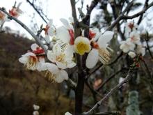 +++ りり☆Blog evolution +++ 広島在住OLの何かやらかしてる日記(ゝω・)o-20110213_004.jpg