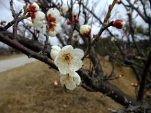 +++ りり☆Blog evolution +++ 広島在住OLの何かやらかしてる日記(ゝω・)o-20110213_029.jpg