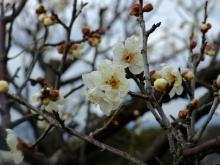 +++ りり☆Blog evolution +++ 広島在住OLの何かやらかしてる日記(ゝω・)o-20110213_049.jpg