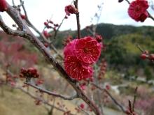+++ りり☆Blog evolution +++ 広島在住OLの何かやらかしてる日記(ゝω・)o-20110213_043.jpg