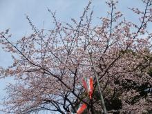 +++ りり☆Blog evolution +++ 広島在住OLの何かやらかしてる日記-20110312_008.jpg
