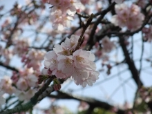 +++ りり☆Blog evolution +++ 広島在住OLの何かやらかしてる日記-20110312_011.jpg