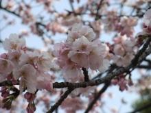 +++ りり☆Blog evolution +++ 広島在住OLの何かやらかしてる日記-20110312_012.jpg