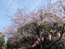 +++ りり☆Blog evolution +++ 広島在住OLの何かやらかしてる日記-20110312_020.jpg