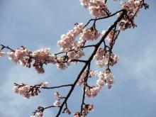 +++ りり☆Blog evolution +++ 広島在住OLの何かやらかしてる日記-20110312_021.jpg