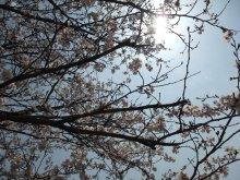 +++ りり☆Blog evolution +++ 広島在住OL<br />の何かやらかしてる日記-20110409_003.jpg