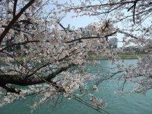 +++ りり☆Blog evolution +++ 広島在住OLの何かやらかしてる日記-20110409_007.jpg