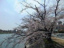 +++ りり☆Blog evolution +++ 広島在住OLの何かやらかしてる日記-20110409_009.jpg