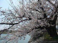 +++ りり☆Blog evolution +++ 広島在住OLの何かやらかしてる日記-20110409_011.jpg