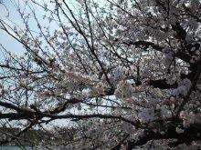 +++ りり☆Blog evolution +++ 広島在住OLの何かやらかしてる日記-20110409_012.jpg
