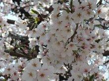 +++ りり☆Blog evolution +++ 広島在住OLの何かやらかしてる日記-20110409_013.jpg