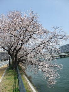 +++ りり☆Blog evolution +++ 広島在住OLの何かやらかしてる日記-20110409_015.jpg