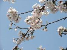 +++ りり☆Blog evolution +++ 広島在住OLの何かやらかしてる日記-20110409_025.jpg