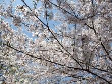 +++ りり☆Blog evolution +++ 広島在住OLの何かやらかしてる日記-20110410_032.jpg