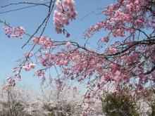 +++ りり☆Blog evolution +++ 広島在住OLの何かやらかしてる日記-20110410_034.jpg
