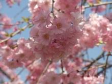 +++ りり☆Blog evolution +++ 広島在住OLの何かやらかしてる日記-20110410_038.jpg