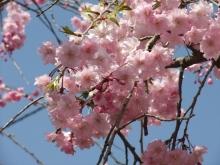 +++ りり☆Blog evolution +++ 広島在住OLの何かやらかしてる日記-20110410_039.jpg