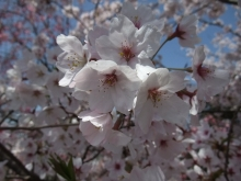 +++ りり☆Blog evolution +++ 広島在住OLの何かやらかしてる日記-20110410_040.jpg