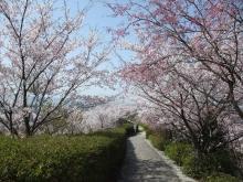 +++ りり☆Blog evolution +++ 広島在住OLの何かやらかしてる日記-20110410_041.jpg