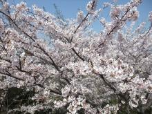+++ りり☆Blog evolution +++ 広島在住OLの何かやらかしてる日記-20110410_044.jpg