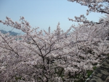+++ りり☆Blog evolution +++ 広島在住OLの何かやらかしてる日記-20110410_045.jpg