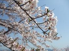 +++ りり☆Blog evolution +++ 広島在住OLの何かやらかしてる日記-20110410_052.jpg