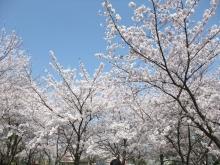 +++ りり☆Blog evolution +++ 広島在住OLの何かやらかしてる日記-20110410_073.jpg