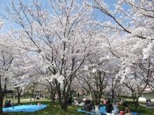 +++ りり☆Blog evolution +++ 広島在住OLの何かやらかしてる日記-20110410_082.jpg