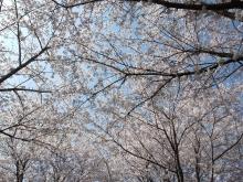 +++ りり☆Blog evolution +++ 広島在住OLの何かやらかしてる日記-20110410_077.jpg