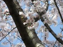 +++ りり☆Blog evolution +++ 広島在住OLの何かやらかしてる日記-20110410_078.jpg