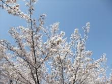 +++ りり☆Blog evolution +++ 広島在住OLの何かやらかしてる日記-20110410_086.jpg