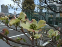 +++ りり☆Blog evolution +++ 広島在住OLの何かやらかしてる日記-20110417_003.jpg