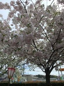 +++ りり☆Blog evolution +++ 広島在住OLの何かやらかしてる日記-20110417_005.jpg