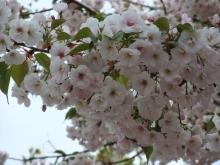 +++ りり☆Blog evolution +++ 広島在住OLの何かやらかしてる日記-20110417_006.jpg