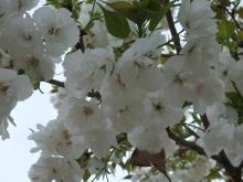 +++ りり☆Blog evolution +++ 広島在住OLの何かやらかしてる日記-20110417_008.jpg