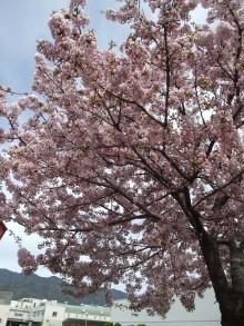 +++ りり☆Blog evolution +++ 広島在住OLの何かやらかしてる日記-20110417_013.jpg