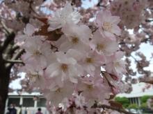 +++ りり☆Blog evolution +++ 広島在住OLの何かやらかしてる日記-20110417_022.jpg