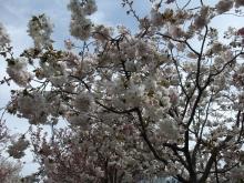 +++ りり☆Blog evolution +++ 広島在住OLの何かやらかしてる日記-20110417_034.jpg