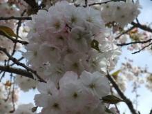+++ りり☆Blog evolution +++ 広島在住OLの何かやらかしてる日記-20110417_035.jpg