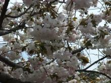 +++ りり☆Blog evolution +++ 広島在住OLの何かやらかしてる日記-20110417_036.jpg