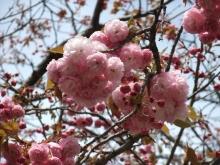 +++ りり☆Blog evolution +++ 広島在住OLの何かやらかしてる日記-20110417_038.jpg